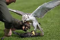 Zástupci společnosti na ochranu dravých ptáků Zayferus mezi dětmi v areálu královéhradecké Bavlny.