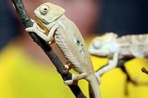 EXOTIK HOBBY,  tradiční výstavní trhy terarijních a akvarijních zvířat v Aldisu.