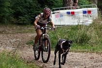 Závody psích spřežení zpravidla nabízejí zajímavou podívanou.