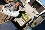 Proč nechávat hnít ovoce na zahradě, když z něj můžete vyrobit pálenku? Existují pálenice, kde z přivezeného ovoce vypálí tekutý mok