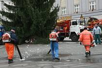 Usazování vánočního stromu města Hradce Králové na Masarykově náměstí