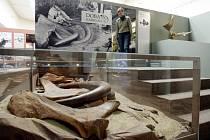 Výstava zvaná Pravěk je kůůl v Muzeu východních Čech v Hradci Králové.