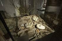 Hradecké muzeum zdobí originální šperky
