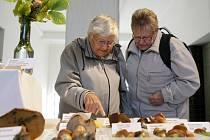 """Výstava """"Houby živé, jedlé i jedovaté"""" v Muzeu východních Čech v Hradci Králové."""