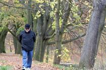 Stromy podél řeky Orlice v Hradci Králové.