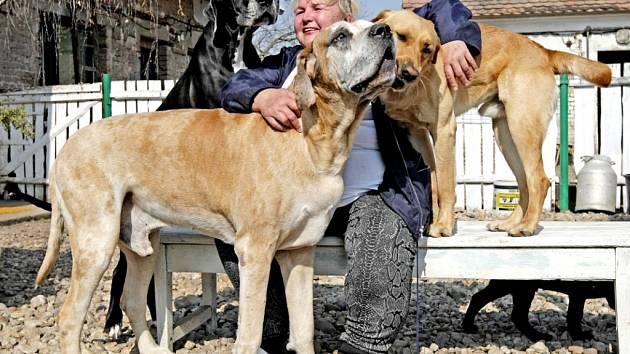 Azylový dvůr pro psy ve Lhotě pod Libčany.