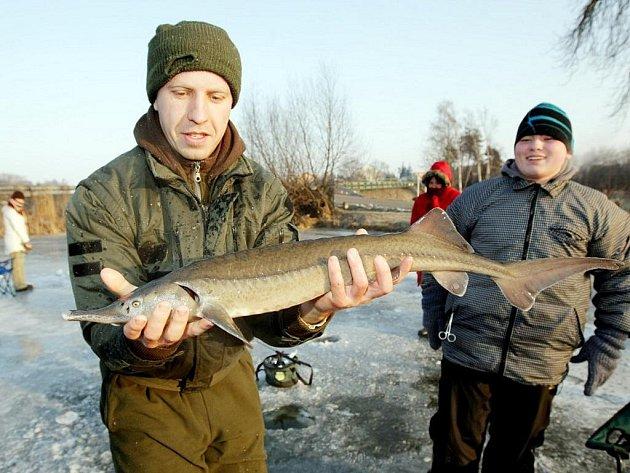 Ani silný mráz neodradil zhruba dvacítku rybářů, kteří si přijeli do Holohlav zachytat ryby na dírkách.