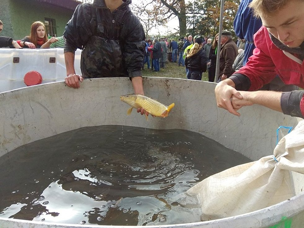 Chmelovický rybník při výlovu.