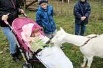 Nemocná Vaneska při krmení kozy.