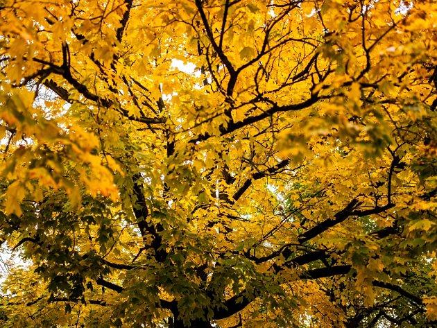 Podzim na východě Čech.
