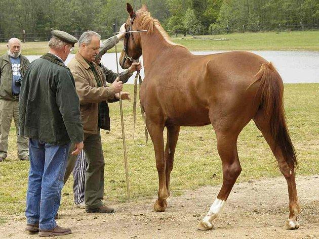 Z kunčické přehlídky koní