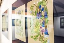 Botanické ilustrace - výstava Jarmily Haldové v novoměstské Galerii Zázvorka.