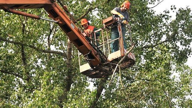 Prořez stromů v Hradci Králové