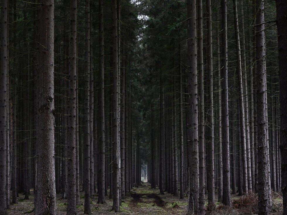 Les ukrývá víc, než myslíte.