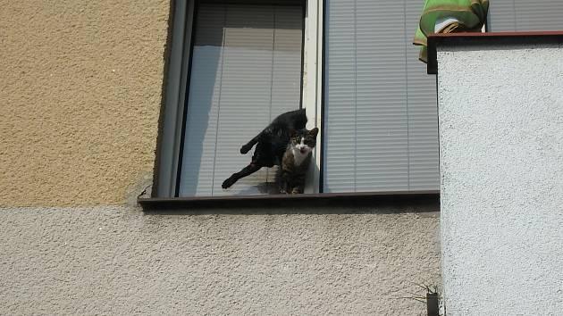 Co se dělo uvnitř bytu, když nebyla majitelka doma, to můžeme jen odhadovat. Výsledkem však byly dvě kočky zaseknuté v okně otevřeném na ventilaci.