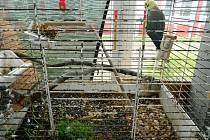 NEUTĚŠENÝ STAV panoval ve všech klecích a akváriích.Zvířata ve škole byla pro účely chovatelského kroužku, ten nyní ve škole končí a zvířata putují do dobrých rukou. Podle ředitele zoo koutek v červnu takto určitě nevypadal a ani si žádný rodič nestěžoval