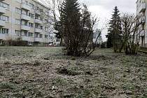 Piliny jako pozůstatek kácení některých stromů na Slezském Předměstí v Hradci Králové.