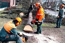 Technické služby začaly 1. března kácet stromořadí v Šimkově ulici v centru města.
