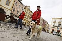 Soutěž nevidomých s vodicími psy v centru Hradce Králové.