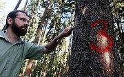 Lesy Královéhradeckého kraje patří mezi nejohroženějších v České republice, kde se letos tento kůrovec množí ostošest.