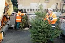 Technické služby města Hradec Králové při sběru vyhozených vánočních stromků v krajské metropoli.