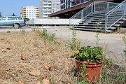 Na špatný stav Benešovky upozorňují partyzánsky vysázené květiny, ale i náletové dřeviny.
