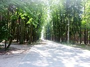 Hradečnice v lesích kolem Hradce Králové.