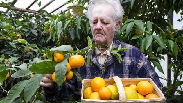 Kilogramy citrusů rostou také v Hradci