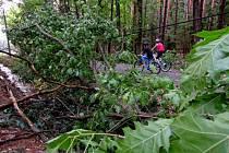 Do lesů cyklisté jezdí bo bouřích i přes zákaz.