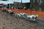 Hradecký mid, závody musherů