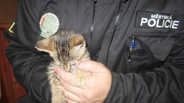 Strážníky odchycená kočka.