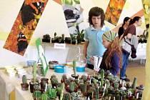 Výstava Klubu kaktusářů z Hradce Králové v Jiráskových sadech.