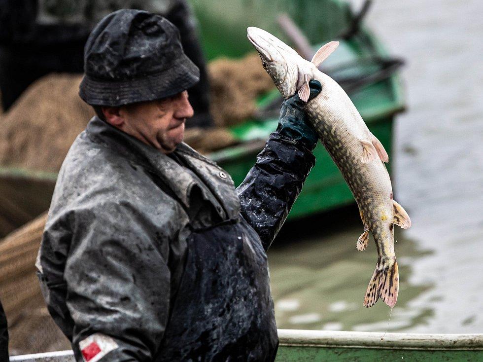 Výlov rybníku Broumar v Opočně.