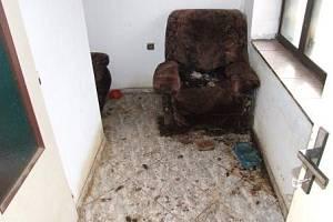 Místo, kde byli mrtví psi nalezeni