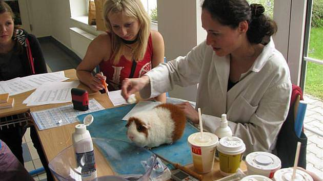 Charitativní výstava morčat v kuklenské veterinární škole (11. září 2010).