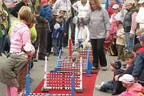 V Třebechovicích se vystavovali papoušci, králící, holubi a drůbež. Na výstavě chovatelského svazu byl k vidění i běh králíků přes překážky – Králičí hop, který ocenily hlavně děti.