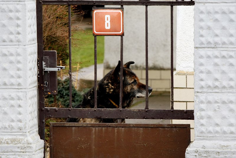 Na zahradě domu v Chudeřicích u Chlumce nad Cidlinou byla ve středu nalezena mrtvola mladého muže.