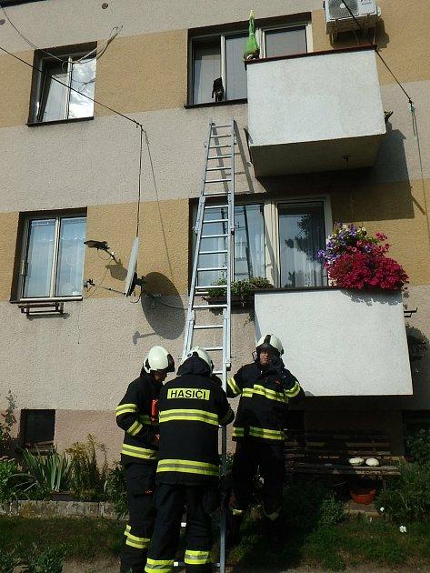 Co se dělo uvnitř bytu, když nebyla majitelka doma, to můžeme jen odhadovat. Výsledkem však byly dvě kočky zaseknuté vokně otevřeném na ventilaci.