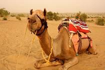 Koráb pouště.