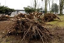Likvidace větrem poškozených stromů v Hradci Králové.