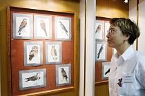 Výstava nazvaná Vědecká ilustrace české fauny pořádaná v budově u hradeckých Šimkových sadů Lékařskou fakultou Univerzity Karlovy.