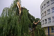 Jediný nápor větru zlomil vrbu před hradeckou budovou Deníku.
