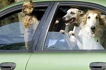 Psi v autě v horkém počasí.