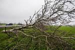 Pokácené stromy na trase budoucího úseku dálnice D11.