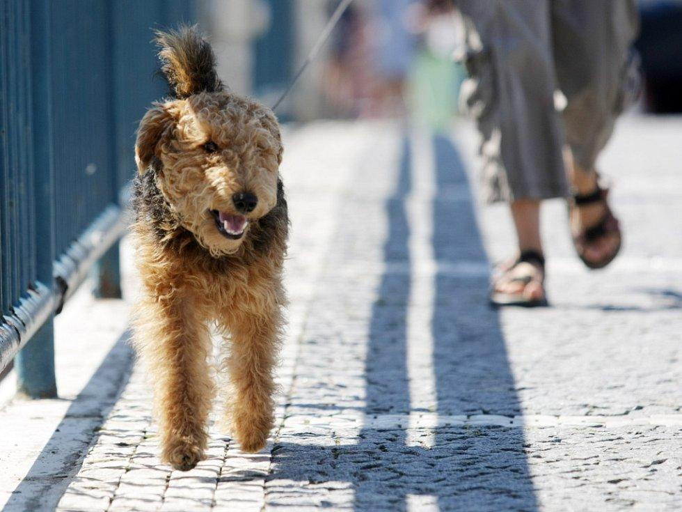 Procházka se psem. Ilustrační foto.
