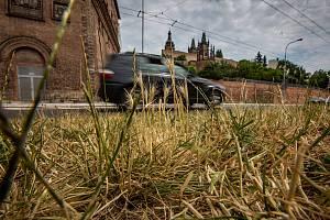 Suchý trávník v Hradci Králové.