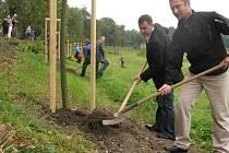 Díky nové tradici bude nyní v Chlumci nad Cidlinou po každém narození dítěte vysazen strom