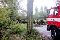 Pád stromu u příjezdové cesty k DTJ na okraji Hradce Králové.