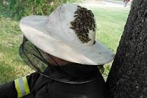 Hasiči při setkání s bodavým hmyzem.