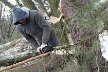 Přírodní památka Na Plachtě v současné době zažívá nejrozsáhlejší čištění od náletových dřevin.